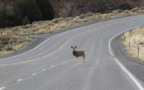 Wildlife Crossing Initiative launched