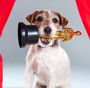 The Stock Doc Presents: The Oscars!