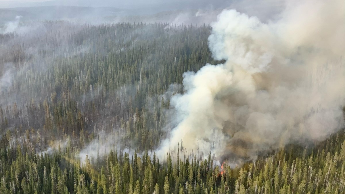 Yellowstone's Lone Star Fire Expanded Sunday to 1,500 acres