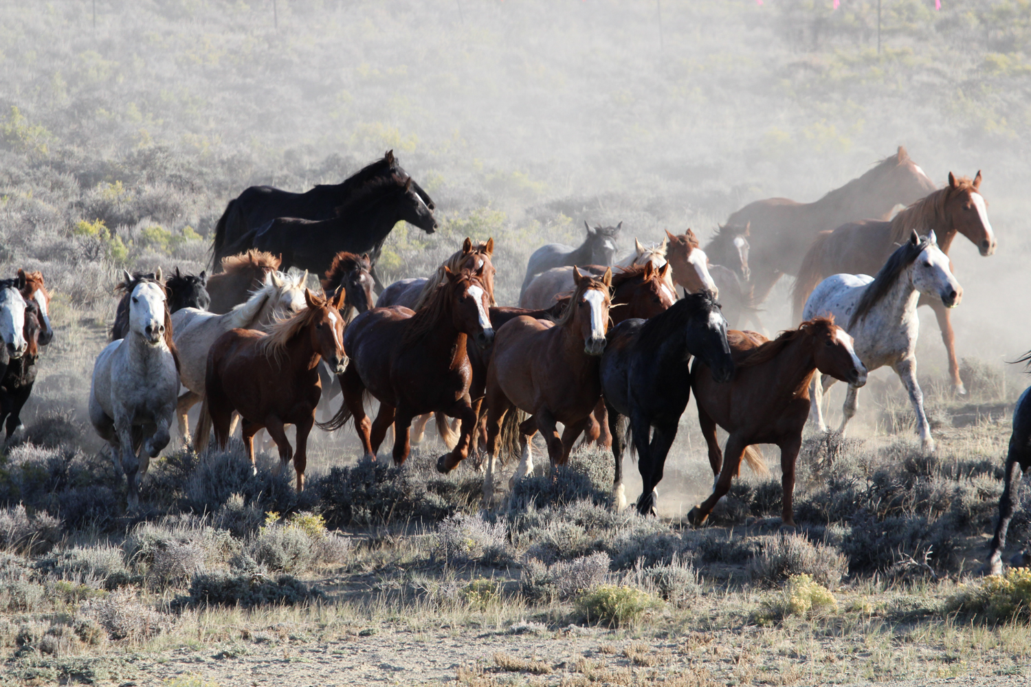 BLM opens public comment on wild horse gather in Great Divide Basin, other areas