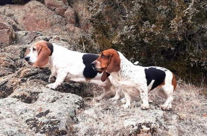 Dog missing after crash Wednesday night