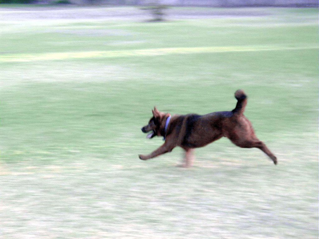 Dog Park coming to Riverton; Rotary's Project close to fruition